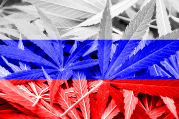 Russia Flag on cannabis background. Drug policy.