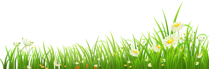 Green grass and flowers on white, vector illustration
