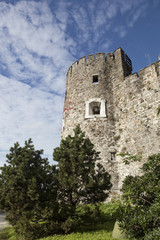 Alberi e torre, Castello di Gorizia