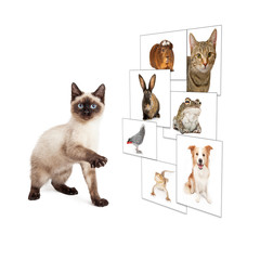 Cat Scrolling Pet Photo Wall