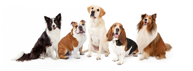 Common Family Dog Breeds Group Wall mural