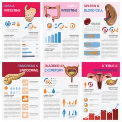 Internal Human Organ Health And Medical Chart Diagram Infographi