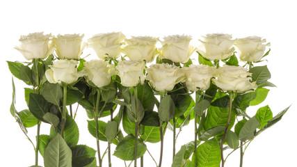 many beautiful roses