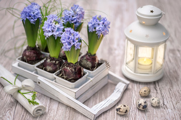 Easter decorations with blue hyacinth flowers