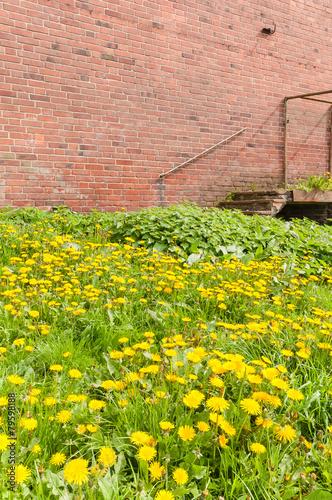 Gartenpflege Verwilderter Garten Plakativ Blumenwiese Stock