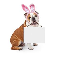 Fototapete - Easter Bunny Bulldog Holding Blank Sign