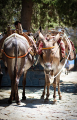 Donkey taxi in Lindos