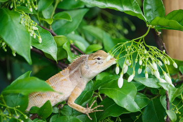 Lizards eat insects on trees