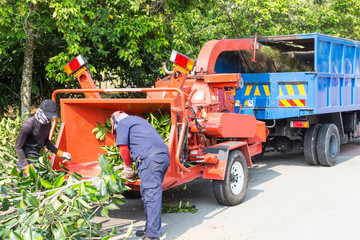 Workers loading tree into the wood chipper to shed