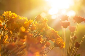 Flowers vibrant at sunrise, soft focus and blur
