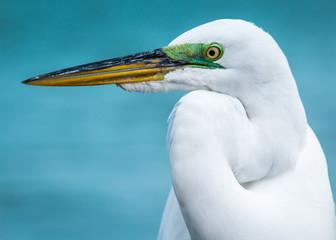 Egret on the Beach