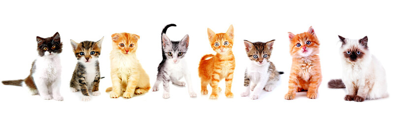 Cute little kittens isolated on white