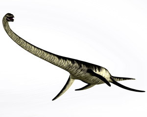 Elasmosaurus Reptile on White