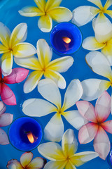 Many frangipani with blue candle in the water