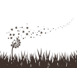 grass with dandelion background