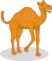 High Quality Camel Vector Cartoon Illustration