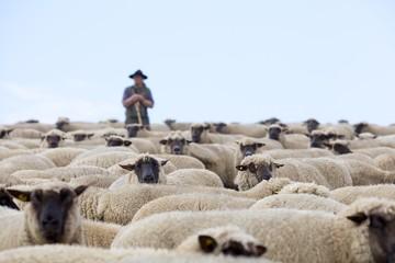 Schäfer und Herde