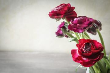 Ranunkeln, Blüten