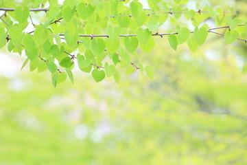ハートの新緑