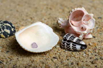 Shells on sand background