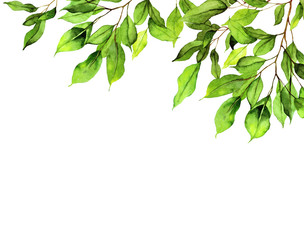 Geen leaves background