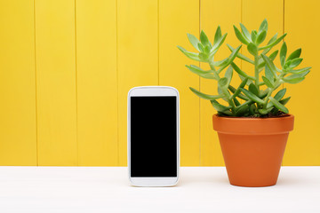 Mobile Phone Beside Green Plant on a Pot