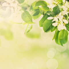 Floral green background with apple flowers and leaves