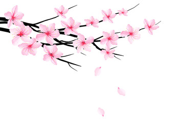 Spring background with blossom branch of sakura. Vector