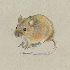 Oil pastel painting. Little mouse on a gray background