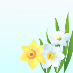 Greeting Сard with Daffodils