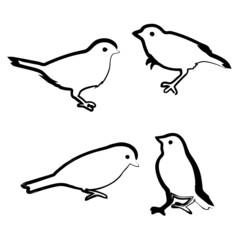 Drawing birds, vector sketch