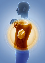 Medical anatomy scan LIVER