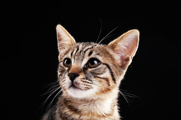 Portrait of stripped kitten on black background
