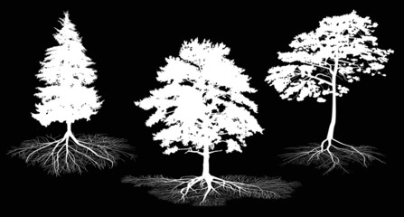 three white tree silhouettes with roots