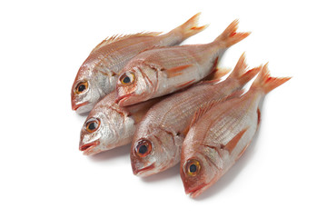 Fresh small raw red snappers