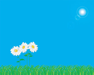 Daisies on green grass against the blue sky.