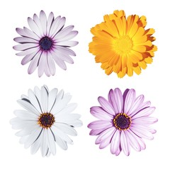 Isolated mixed flower on white background