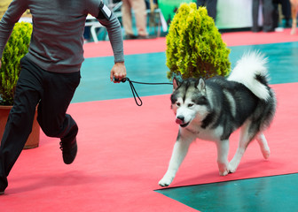 Dog and man at exhibition