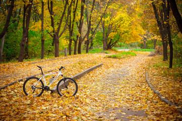 Bicycle in the autumn park