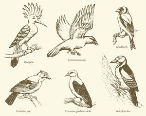 Vector set of birds: crow, hoopoe, oriole, woodpecker, jay, gold
