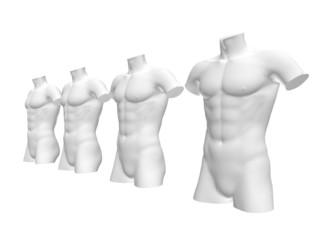 Male body structure