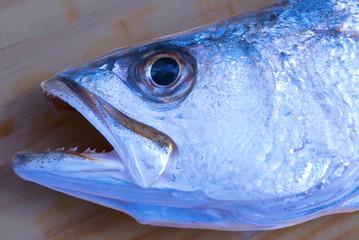 Colorful sea trout head closeup