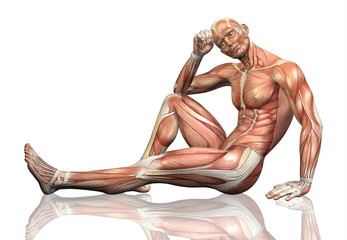 3D male figure sitting with detailed muscle map