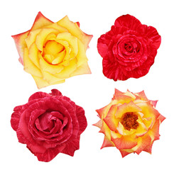 collage of beautiful roses