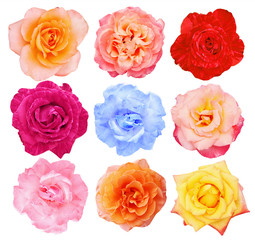 Collection of  roses, top view