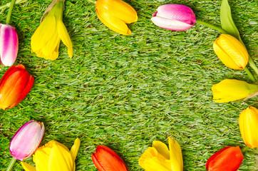 Wall Mural - Tulpen und Narzissen im Rahmen
