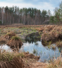 Marsh in spring