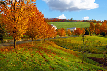 Vermont fall landscape of rolling hills with orange foliage