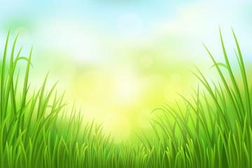 Spring green grass background, vector illustration