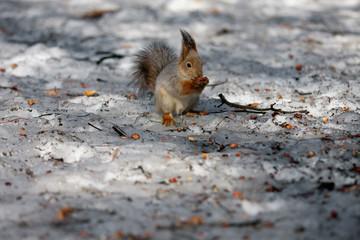 Squirrel dinner.